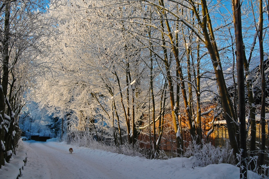 Badenhausen Winter 5